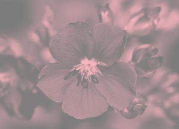 Revista Natureza | Plantas